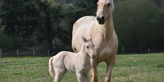Horse Farm Insurance Info